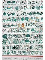 Materia Medica of Vegetable Origin
