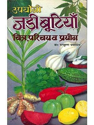 उपयोगी जड़ी बूटियाँ: Useful Herbs