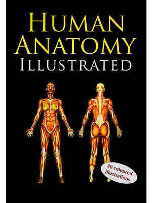Human Anatomy Illustrated (30 Coloured Illustrations)