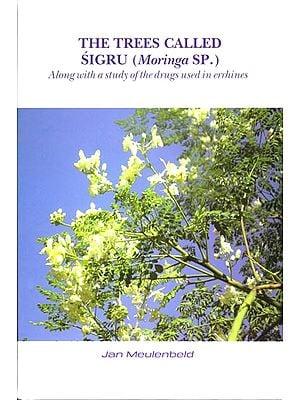 The Trees Called Sigru (Moringa SP.)