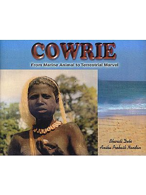 Cowrie: From Marine Animal To Terrestrial Marvel
