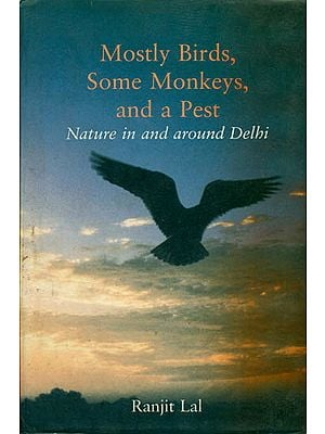 Mostly Birds, Some Monkeys, and a Pest (Nature in and Around Delhi)