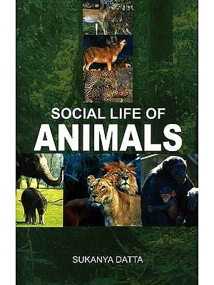 Social life of Animals