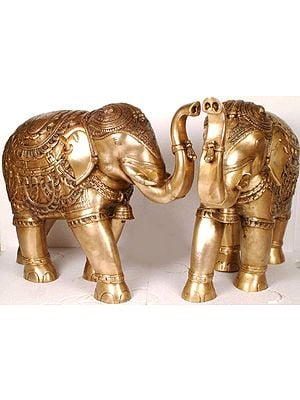 The Elephant Pair