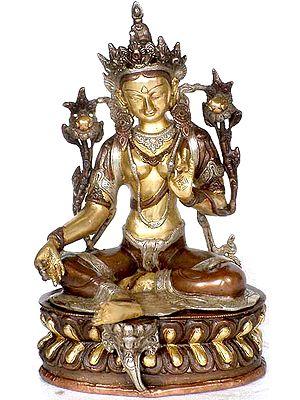 The Green Tara (Tibetan Buddhist Deity)