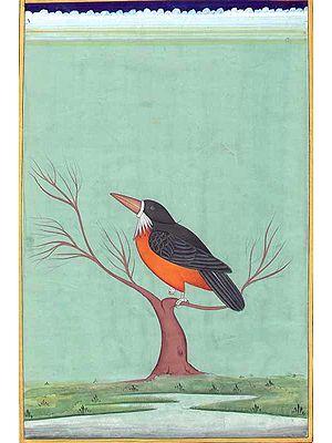 Beaver Bird