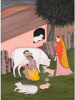 Shri Krishna Milking Cow