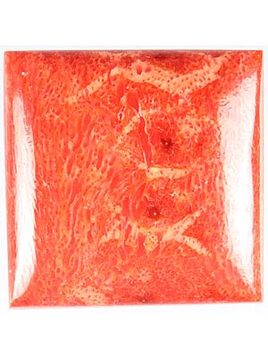 Sponge Coral Cabochon (Price Per Piece)