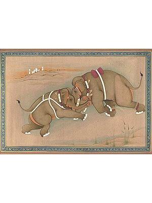 Elephants in Action