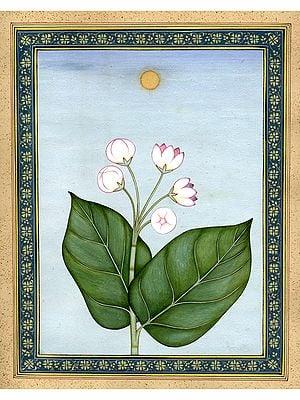 Akara Wild Plant