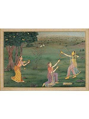The Royal Damsel Shooting Down Mangoes