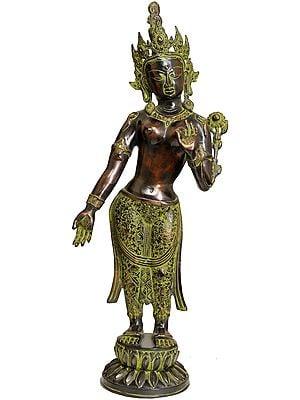 Large Size Standing Goddess Tara (Tibetan Buddhist Deity)