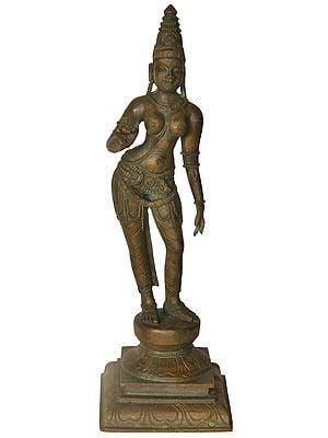 The Tall, Imposing Devi Parvati