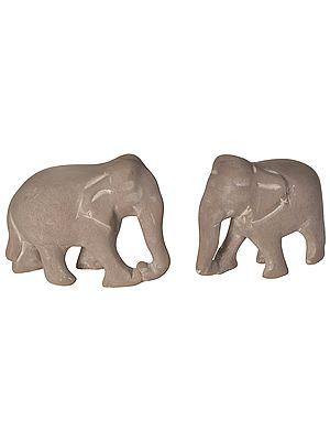 Elephanta Elephants
