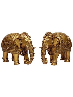 Pair of Ornamented Elephants