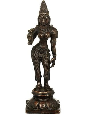 Standing Parvati, A Lotus In Her Hand, Her Crown Towering Atop Her Head