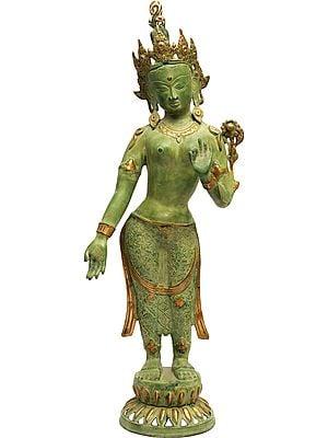 Tibetan Buddhist Deity- Standing Tara (Large Size)