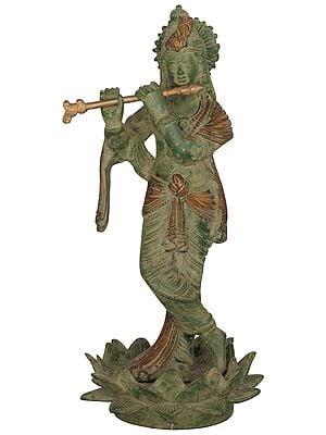 Chandravanshi Krishna, Of The Lunar Dynasty