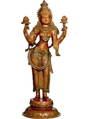 The Calming Gaze Of Padmavati Lakshmi