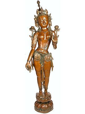 Standing Devi Tara, The Tall And Slender Yogini