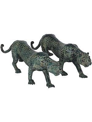 Pair of Cheetah