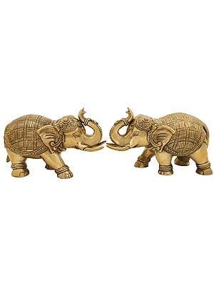 Majestic Elephant Pair