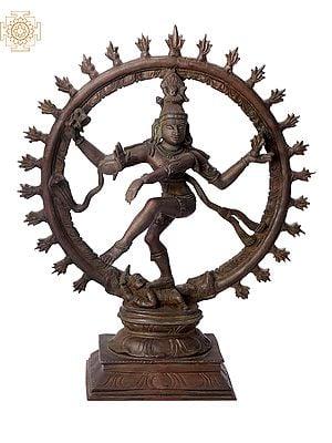 "13"" Nataraja | Handmade | Madhuchista Vidhana (Lost-Wax) | Panchaloha Bronze from Swamimalai"