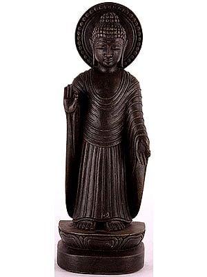 Standing Gandhara Buddha Wearing Roman Toga