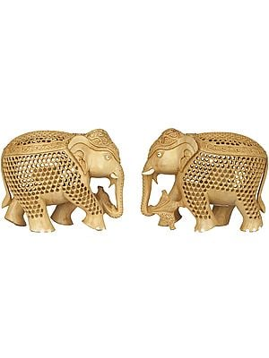 Elephant in Elephant Pair (In Lattice)