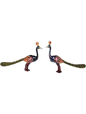 Peacocks Pair