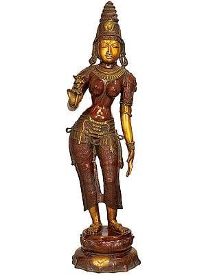 Padmadharini Parvati