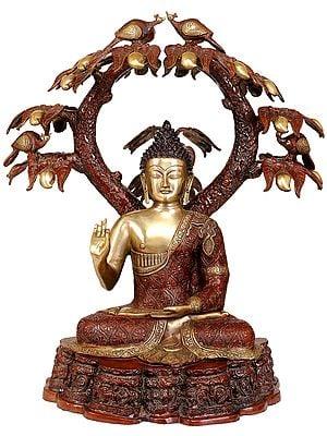 Large Size Lord Buddha in a Mango Grove