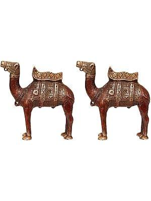 Camel, The Ship of Desert