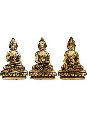 Tibetan Buddhist Deities Set of Three Buddhas (Blessing Buddha, Dhyani Buddha and Medicine Buddha)