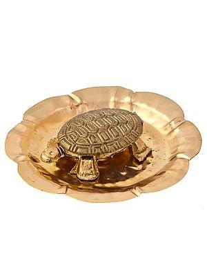 Tortoise on Plate
