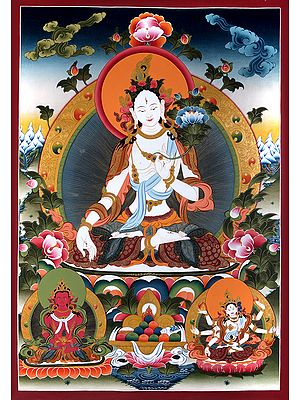 Superfine Tibetan Buddhist Goddess of Compassion White Tara - Large Size Brocadeless Thangka