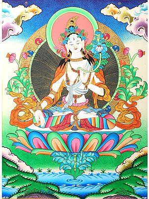 Tibetan Buddhist Saviour Goddess White Tara -Brocadeless Thangka