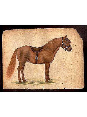 Horse Species of the World - Bashkir