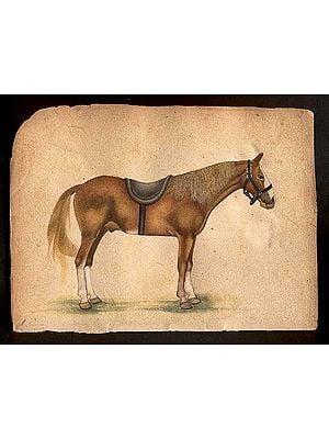 Horse Species of the World - Missouri Fox Trotter