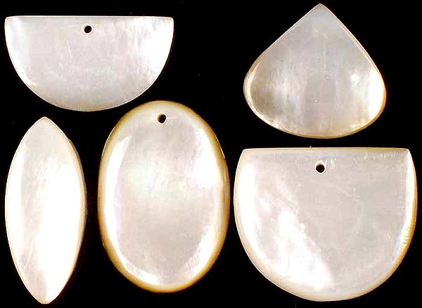 Lot of Five Shell Cabochons (Both Side & Top Drilled)