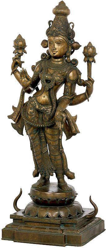 Padmavati Shri Devi, Devi Lotus-Lakshmi