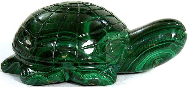Tortoise in Malachite