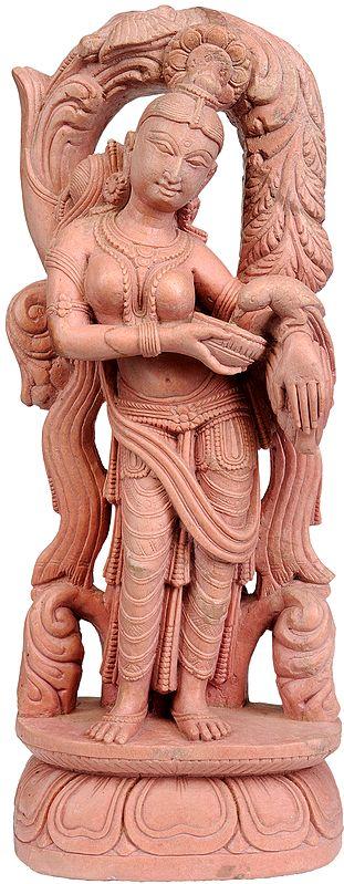 Handsome Apsara Feeds Her Parrot