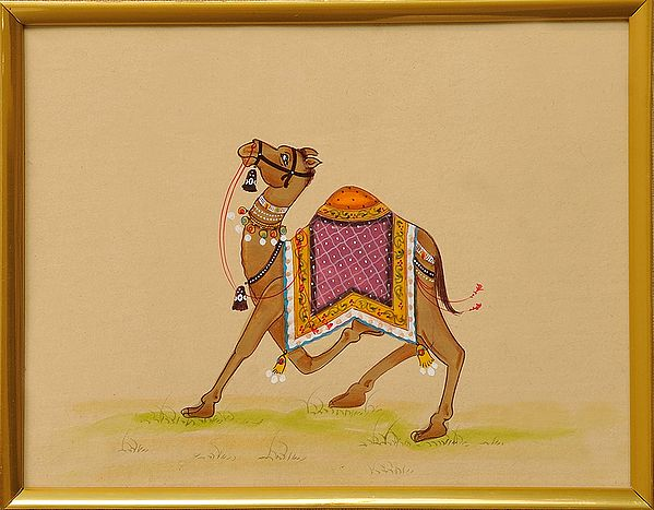 Royal Camel
